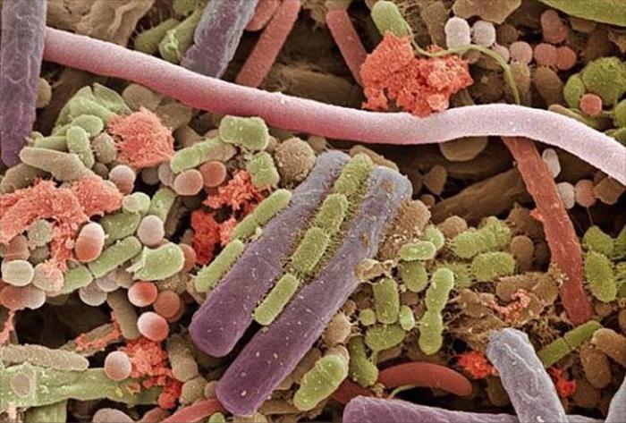 tongue mites