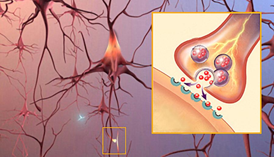synapses_neurotransmitters